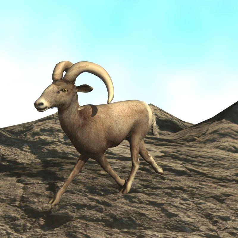 3d blend bighorn sheep