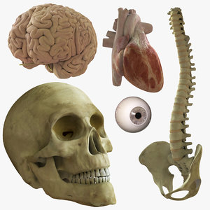 anatomy essential pack rigged 3d ma