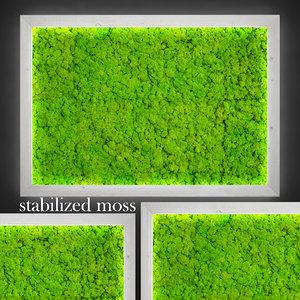 3d fytowall moss