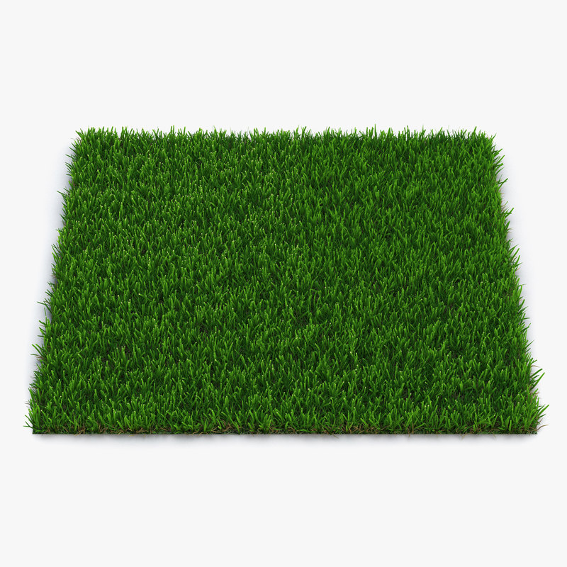 zoysia grass 3d model