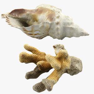 3d model seashell coral