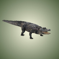 3ds max american alligator