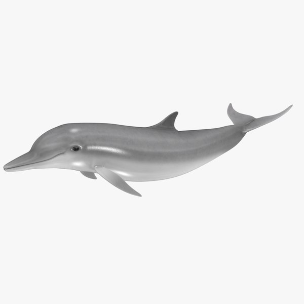 3d model realistic dolphin animation