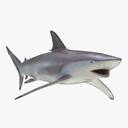 spinner shark 3D models