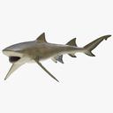 lemon shark 3D models