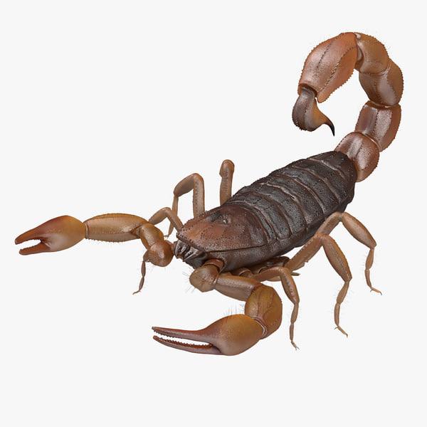 obj scorpion brown