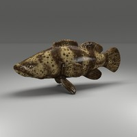 3d model of fish goliath