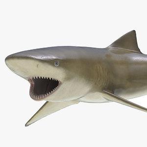 3ds sicklefin lemon shark pose