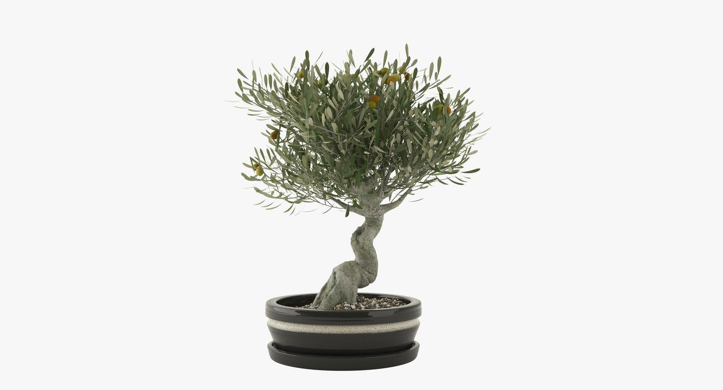 bonsai olive tree 3d max
