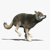 gray wolf 3 fur max