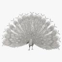 Peacock 3D models