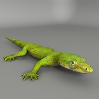 3d model green lizard