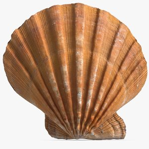 3ds sea shell