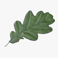 Oak Leaf 02 Green