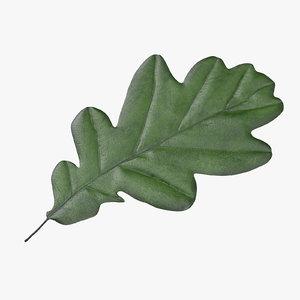 green oak leaf 3d model