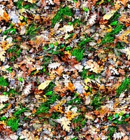 Grass with autumn leaves 1