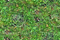 Grass with autumn leaves 19