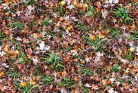 Grass with autumn leaves 3
