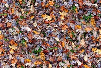 Grass with autumn leaves 2