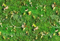 Grass with autumn leaves 28