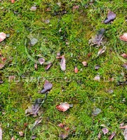Grass with autumn leaves 27