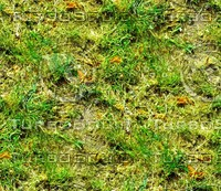 Grass with autumn leaves 26