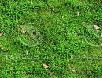 Grass with autumn leaves 20