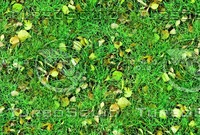 Grass with autumn leaves 23