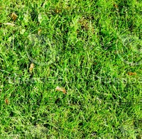 Grass with autumn leaves 38