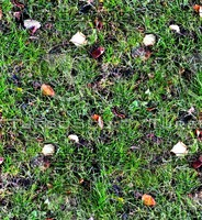 Grass with autumn leaves 34