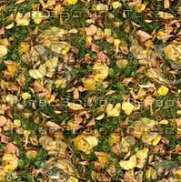 Grass with autumn leaves 33