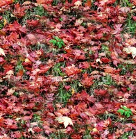 Grass with autumn leaves 6