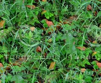 Grass with autumn leaves 39