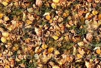 Grass with autumn leaves 8