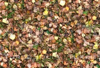 Grass with autumn leaves 9