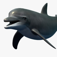 3d dolphin bottlenose rigged