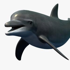 dolphin bottlenose rigged 3d obj