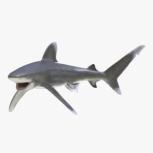 3ds oceanic whitetip shark pose