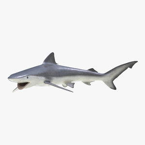 3d model smalltail shark pose 2