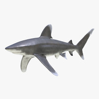 3d model oceanic whitetip shark