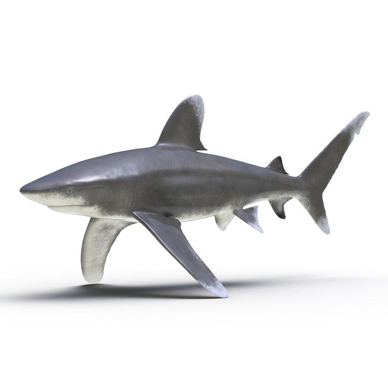 3d model oceanic whitetip shark