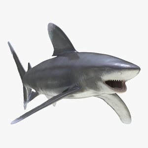 3ds max oceanic whitetip shark rigged