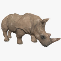 photorealistic low-poly rhino 3d fbx
