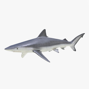 3d model smalltail shark