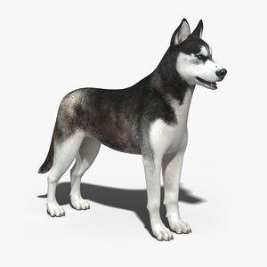 3dsmax siberian husky