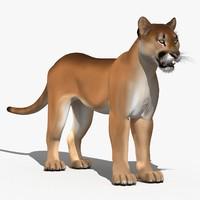 cougar cartoon puma 3d model