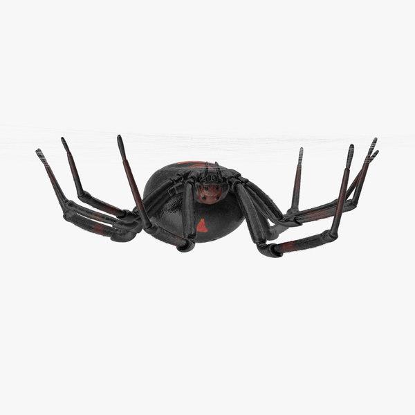 hanging black widow 3d model