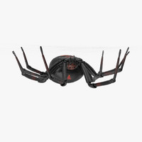 hanging black widow 3d model