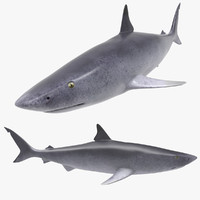 3d shark real