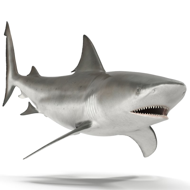 3d model bull shark rigged